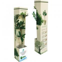 FD-2013 Karton kutu - Canlı Ağaç Fidanı